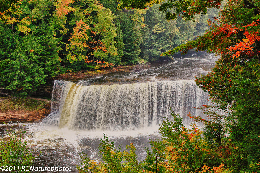The Falls in Fall by Rachel Cohen