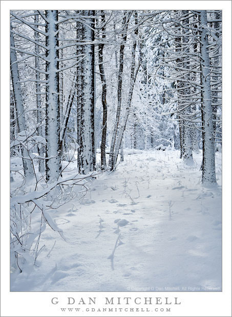 Photograph New Snow, Forest by G Dan Mitchell on 500px