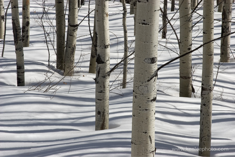 Photograph Aspen Shadows by Ken Lee on 500px