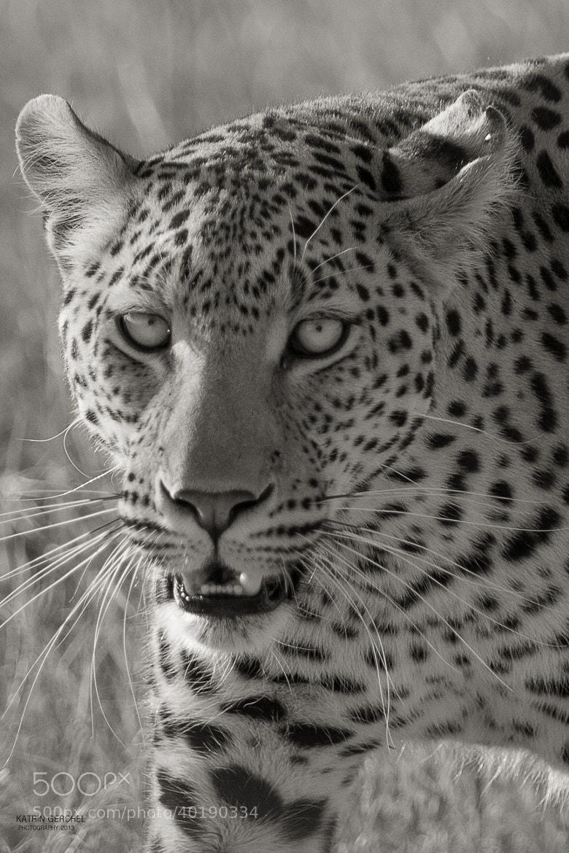 Photograph Leopard, Moremi by Katrin Gerchel on 500px