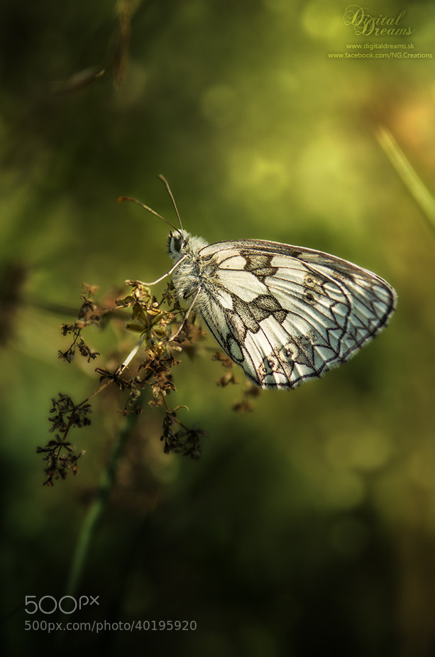 Photograph Butterfly by Norbert G on 500px