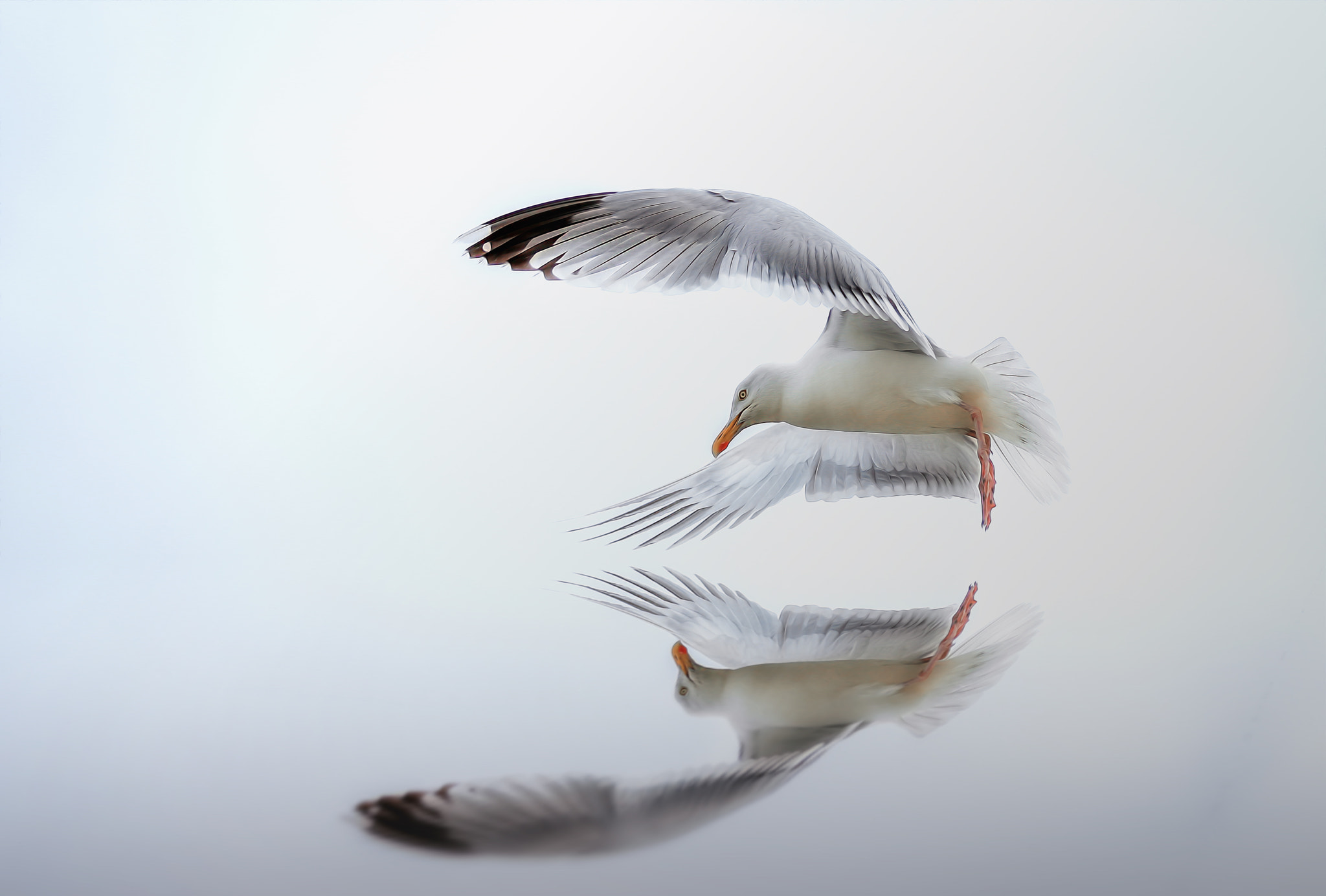 Photograph seagull by Detlef Knapp on 500px