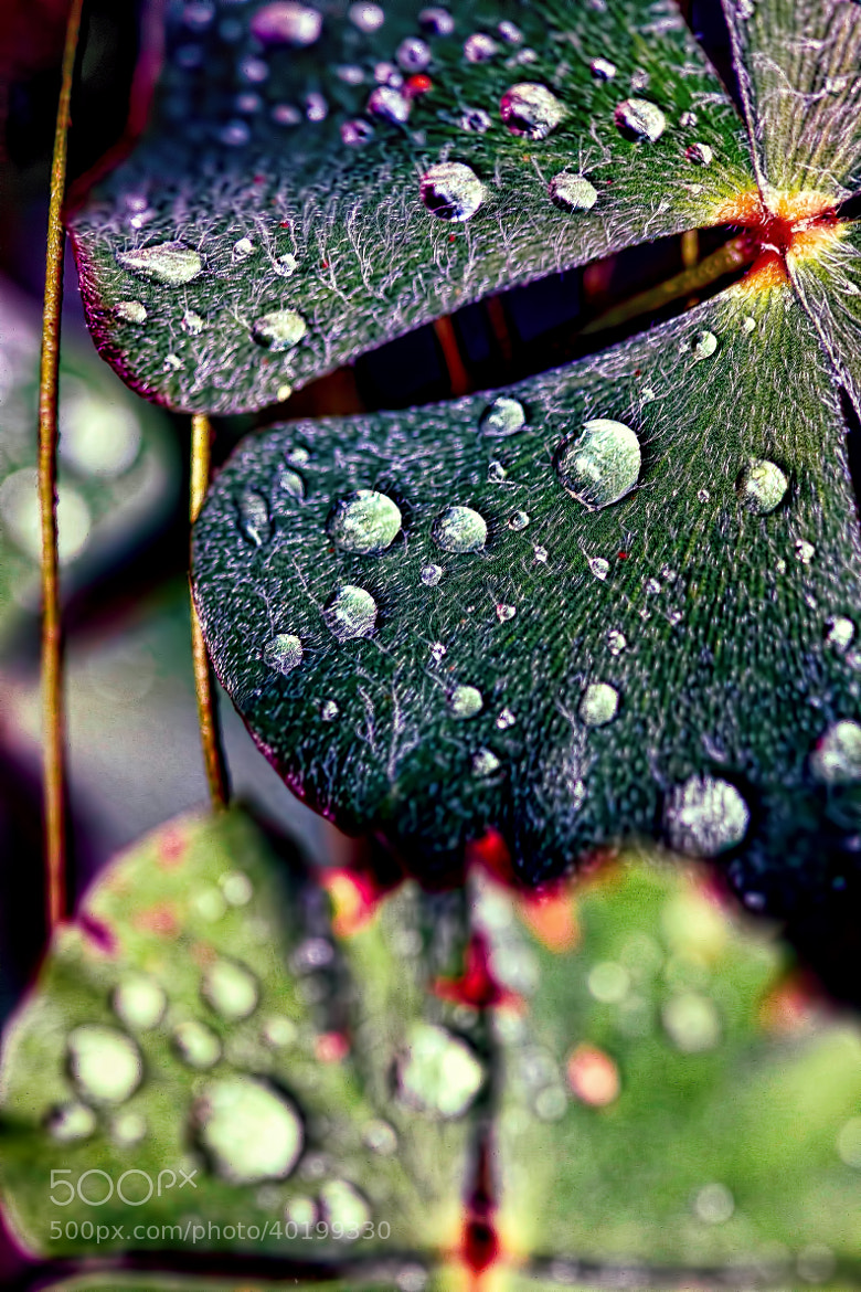 Photograph Clover by Darcy Wheeler on 500px
