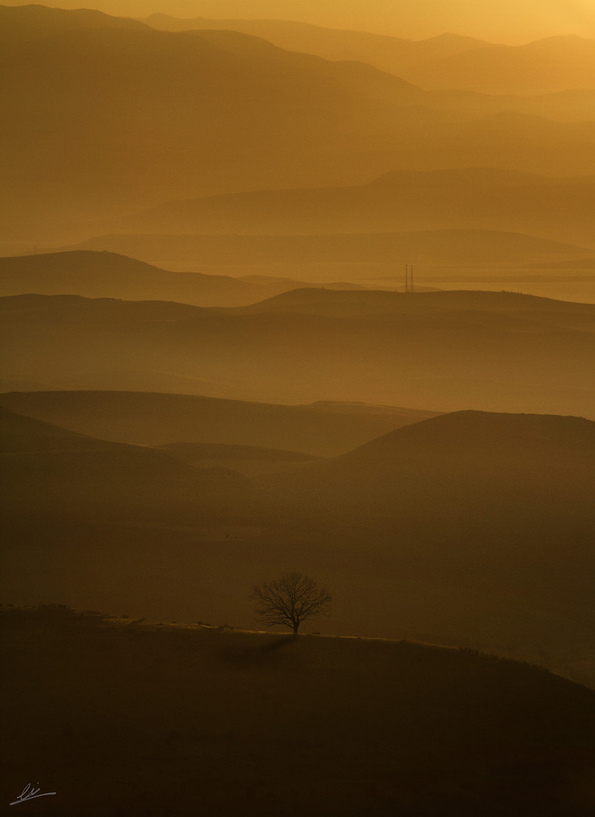 Photograph lonely tree 2  by Engin Asil on 500px