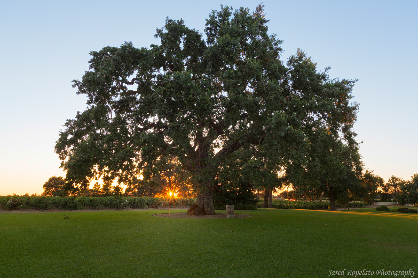 Photograph Oak Farms Tree by jared ropelato on 500px