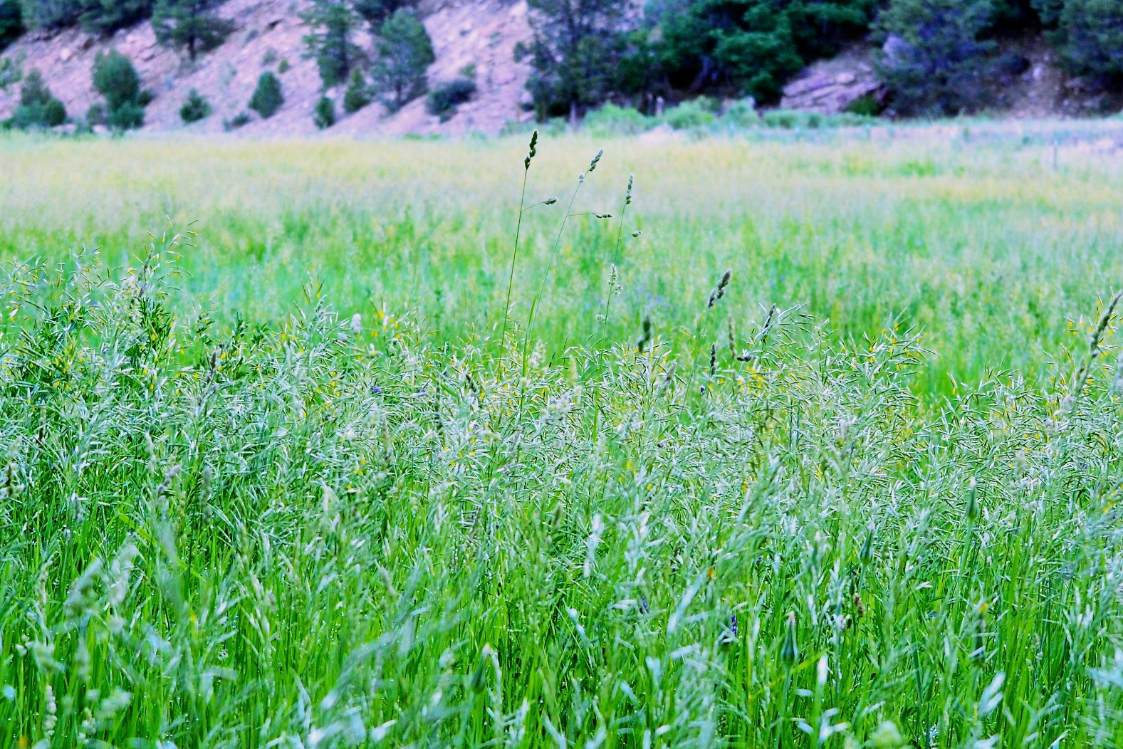 Photograph Grass by Greg  Linster on 500px