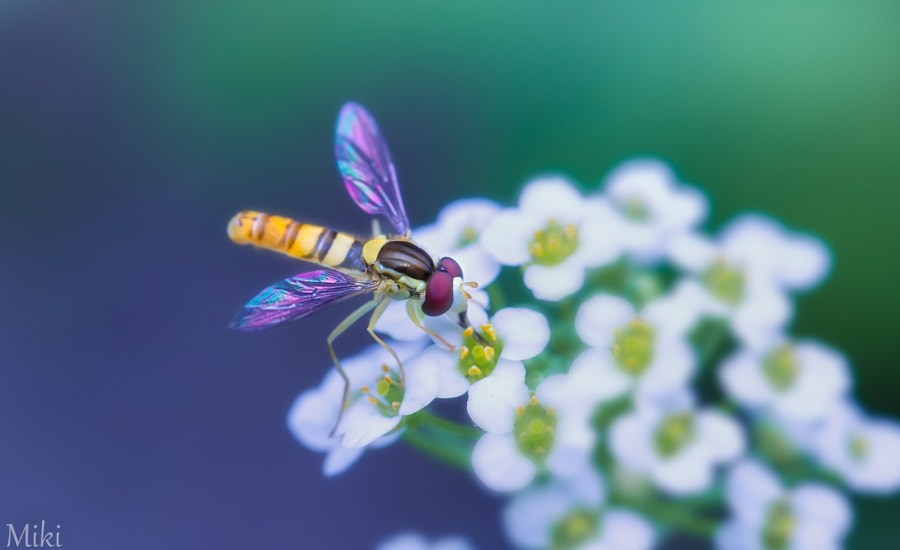 Photograph My wings by Miki Asai on 500px