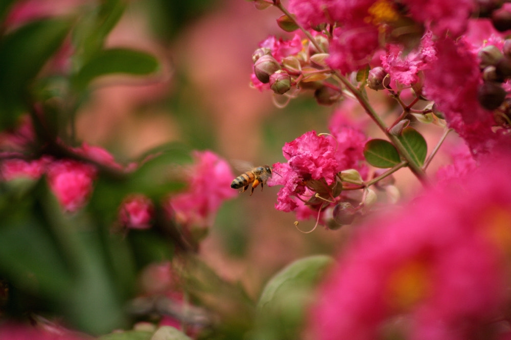Photograph Busy bee by Bob Hudman on 500px