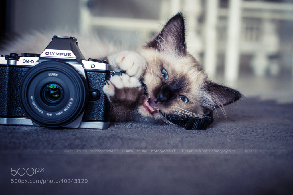 Photograph The photographer - Smile by Olivier Maurin on 500px
