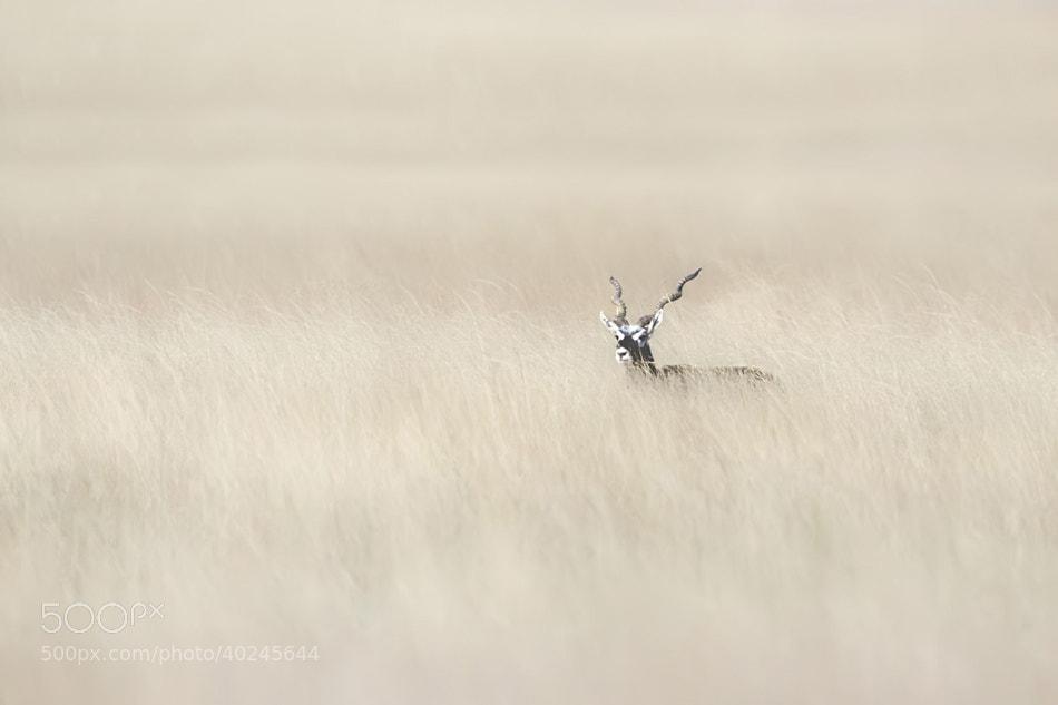 Photograph Alone  by Nitin  Prabhudesai on 500px