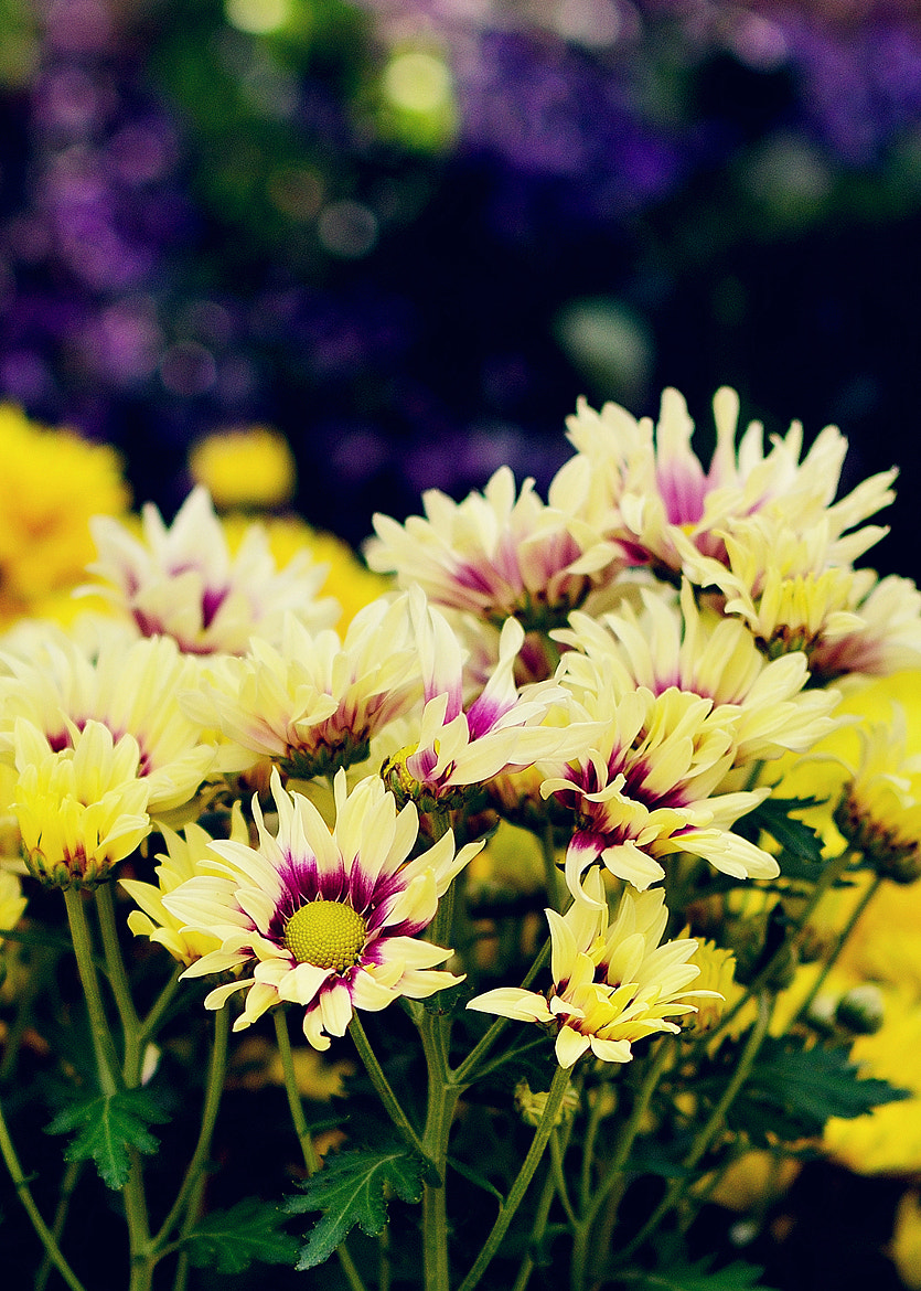 Photograph Little yellow flower by Grace Thang on 500px