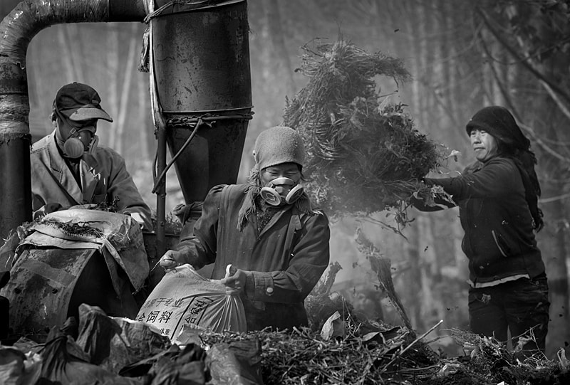 Photograph Grinding feed by Linling Shi-史琳凌 on 500px