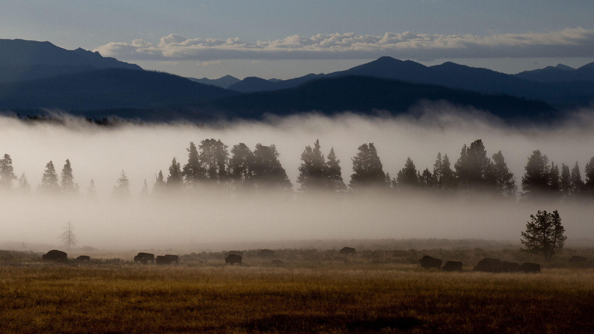 Photograph Yellowstone Mist! by Pat Dwyer on 500px