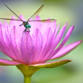 Dragonfly by thung tran on 500px.com