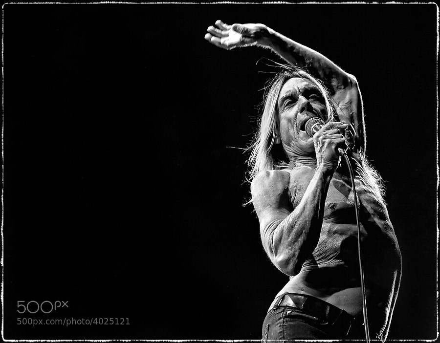 Photograph Iggy Pop  by Luuk Denekamp on 500px