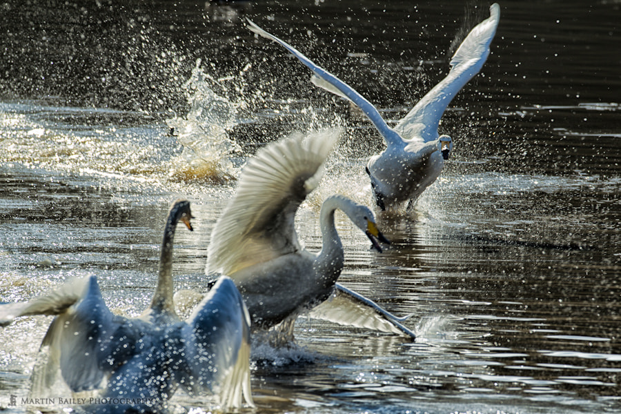 Photograph Get the Flock Outta Here! by Martin Bailey on 500px