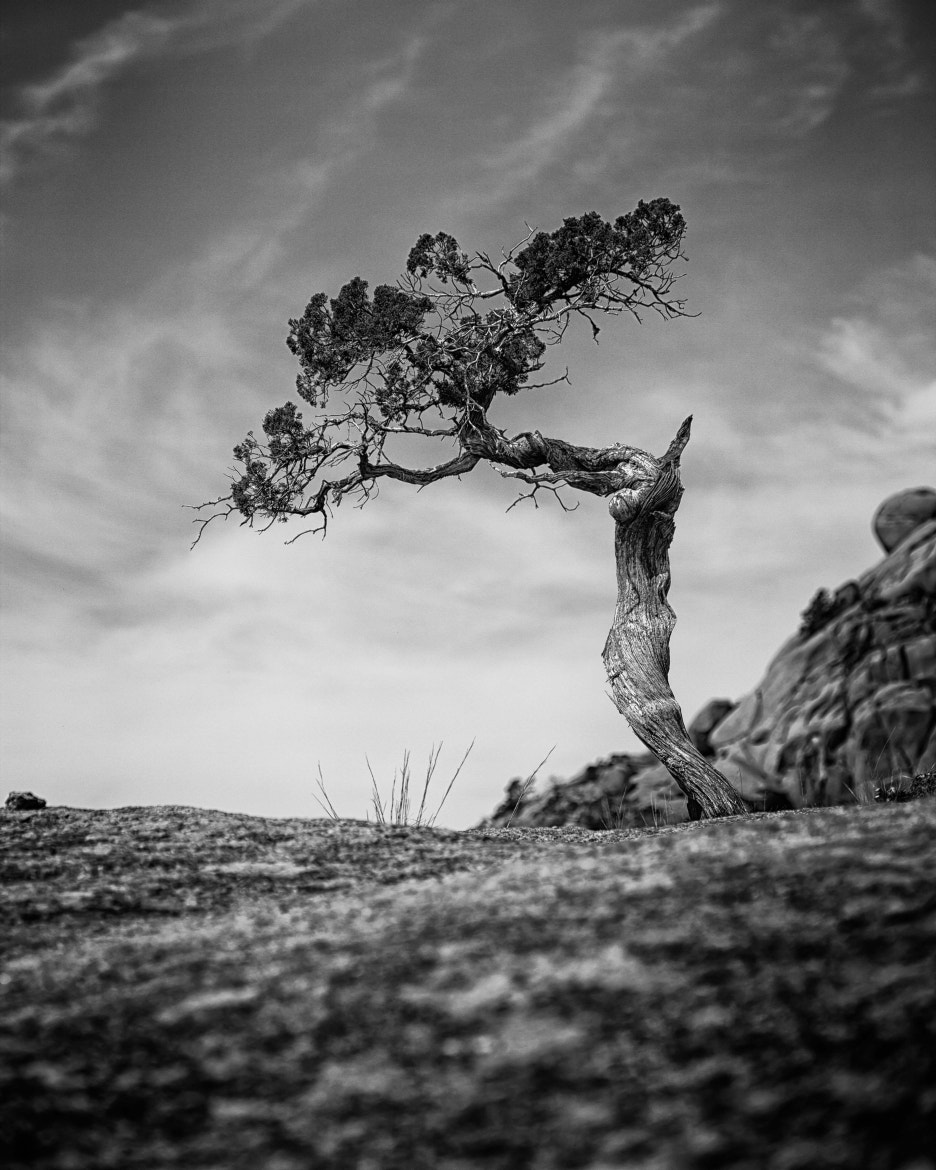 Photograph Tree on the Hill by Mike Weddle on 500px