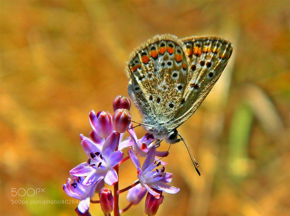 Photograph butterfly by serdar bayır on 500px