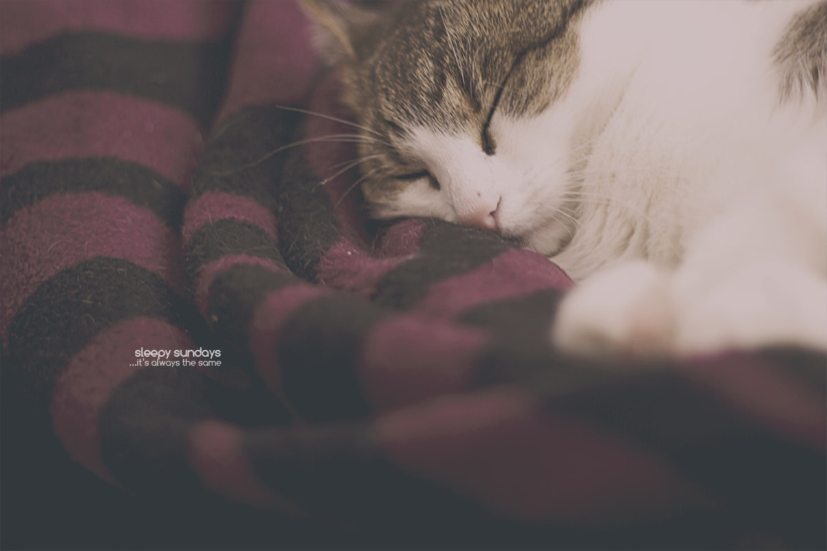 Photograph sleepy sundays by Christopher Wesser on 500px