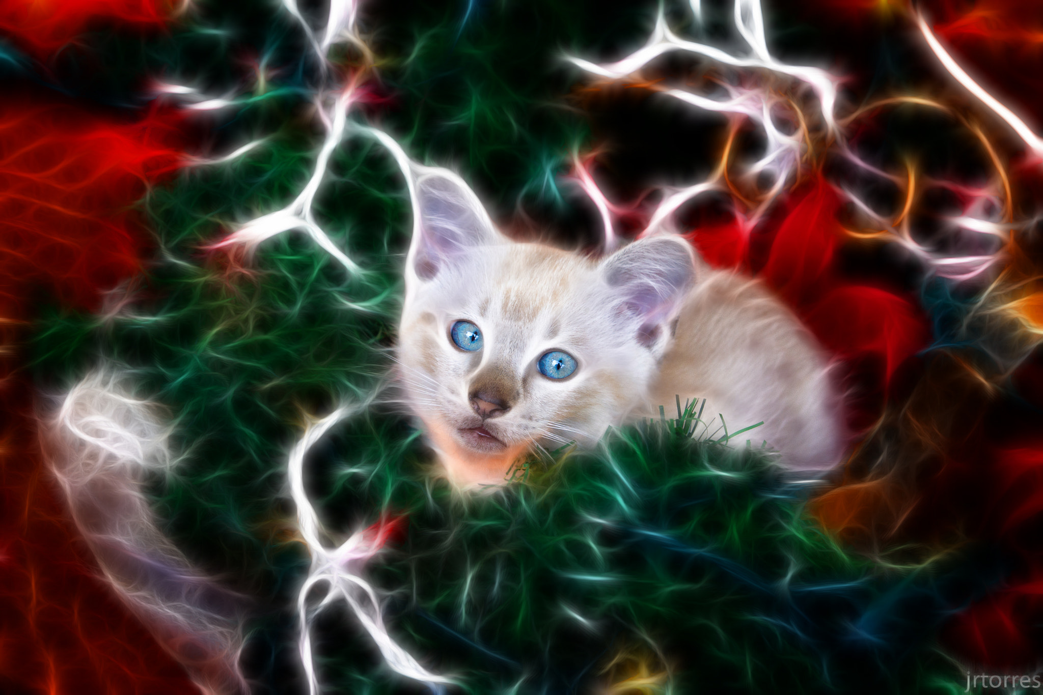 Photograph Electric cat by Juan Torres on 500px