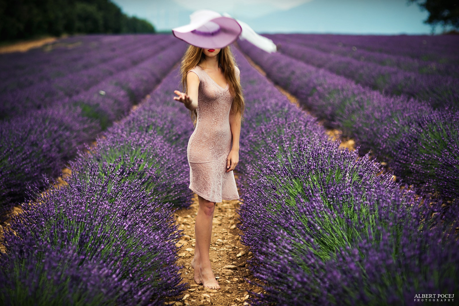 Photograph Lavander by Albert Pocej on 500px