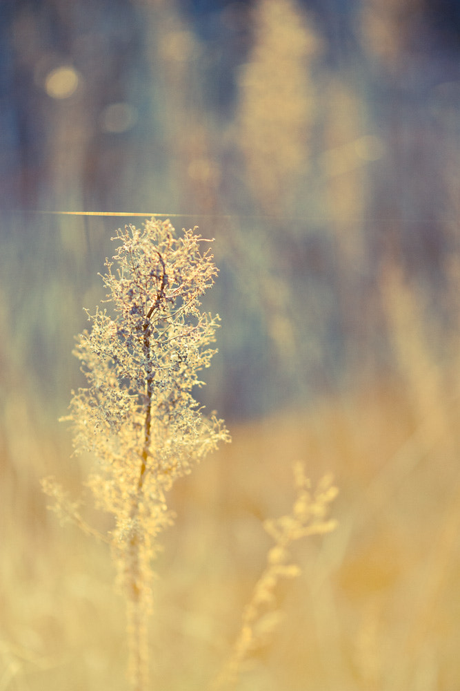 Photograph FACING THE SUN by Alexandre WD on 500px