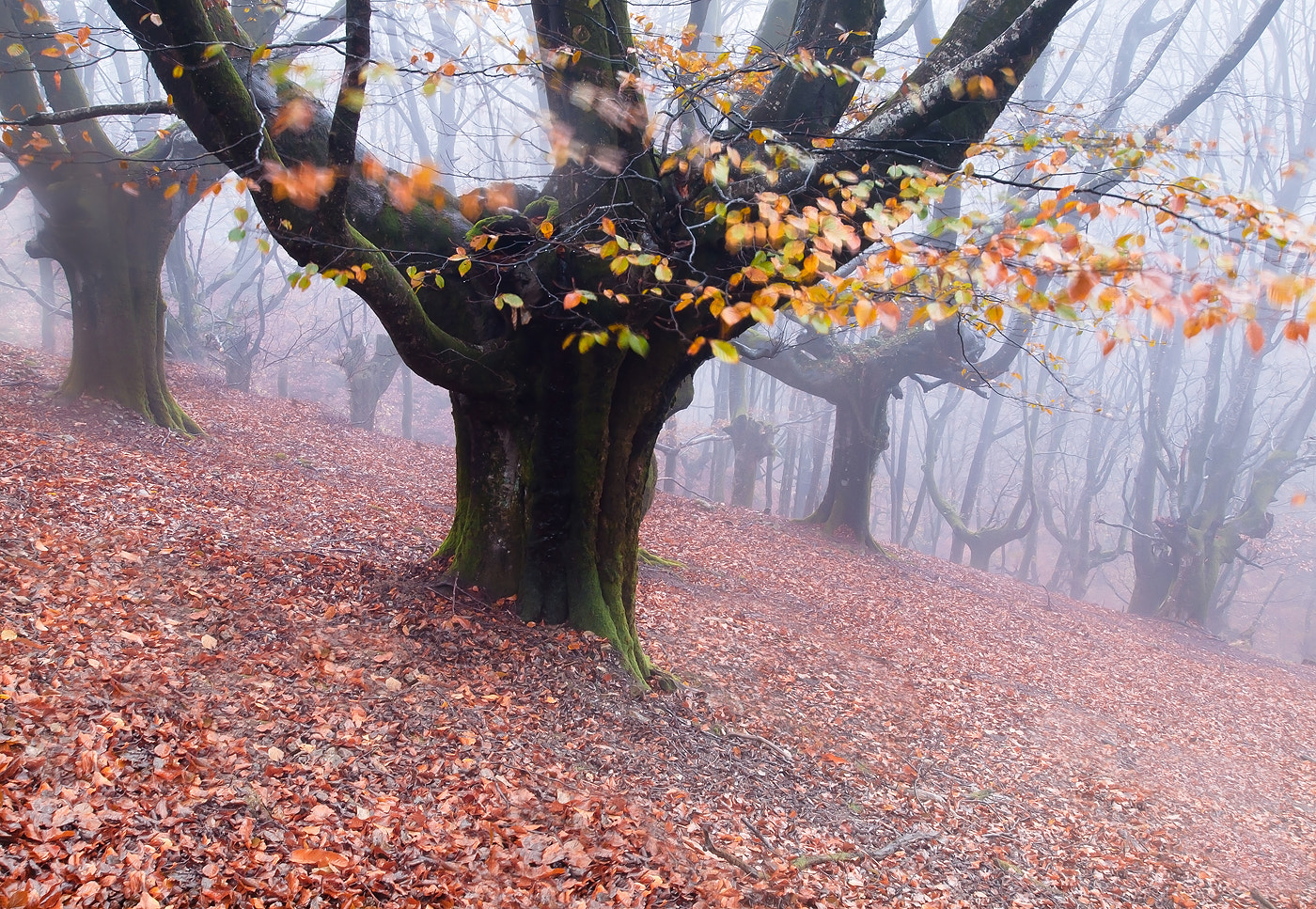 Photograph the ancient beech forest by Daniel Martin. on 500px