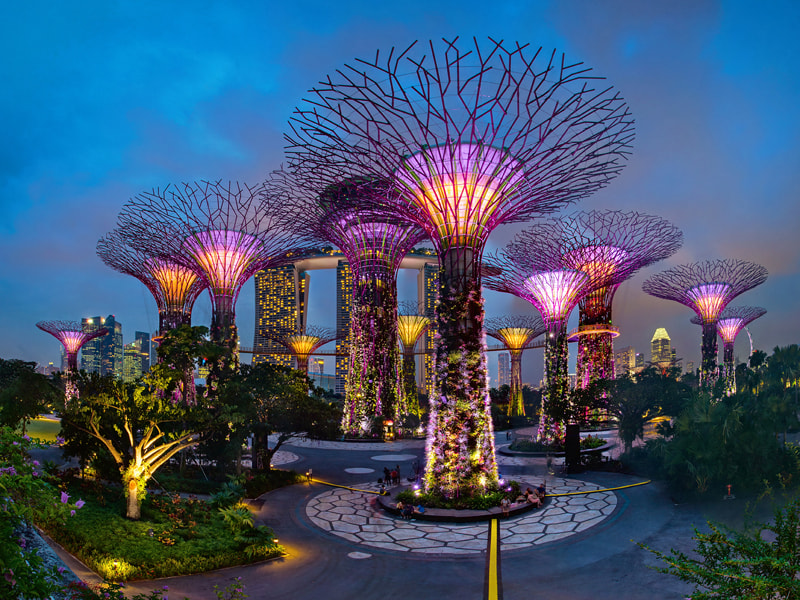 Photograph Flame of the Forest by WK Cheoh on 500px