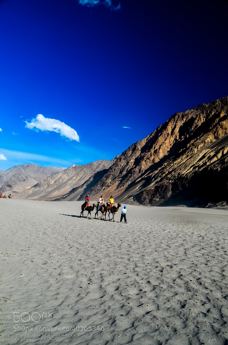 Photograph Camel Safari@Nubra  by Palash K on 500px