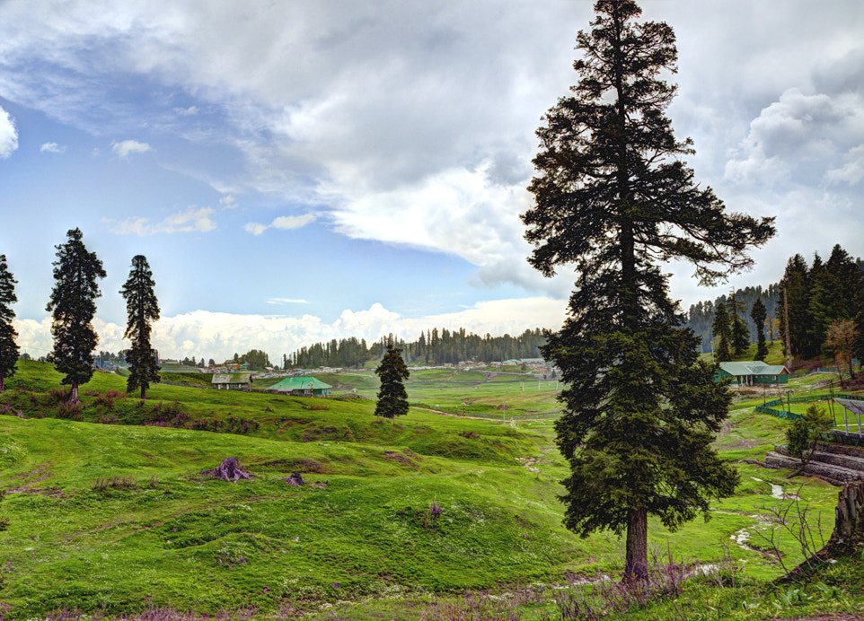 Photograph Pines of Gulmarg. by Mosaddeque Rahman on 500px