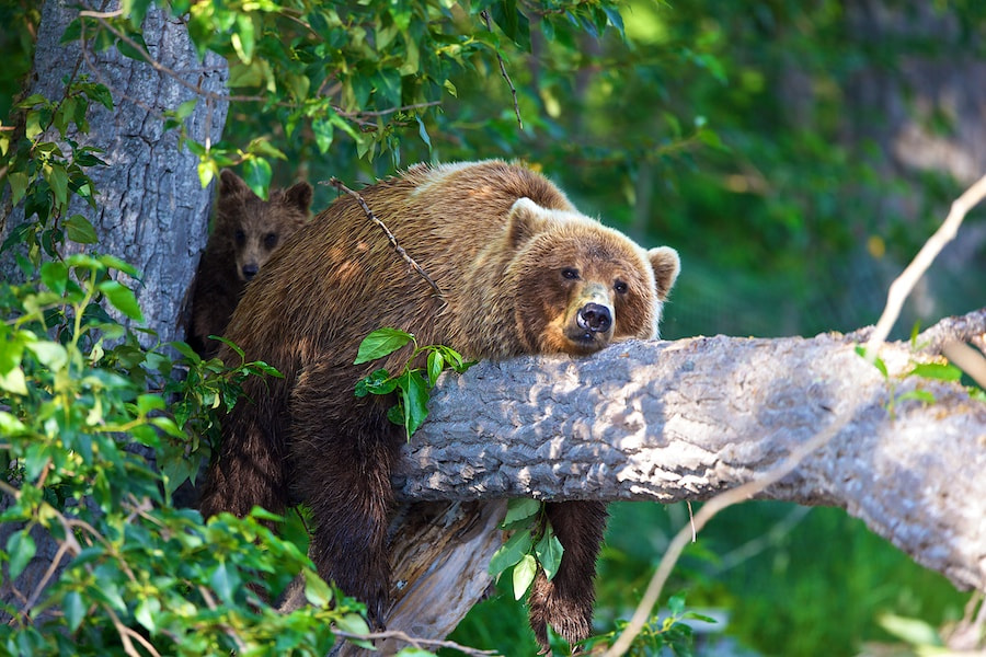 Photograph Unbearable Heat by Buck Shreck on 500px