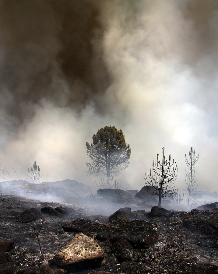Photograph After the Fire by Nuno Milheiro on 500px