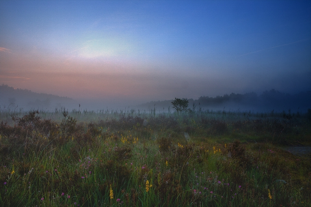 Photograph Colors in the Fog by Eddy VANDERSPIKKEN on 500px