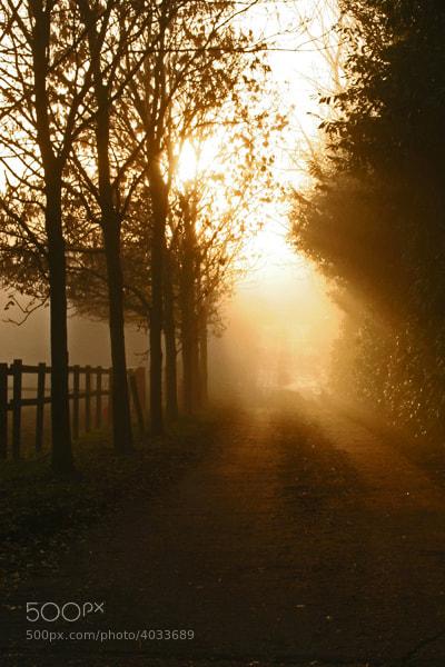 Country lane,Northamptonshire,UK.