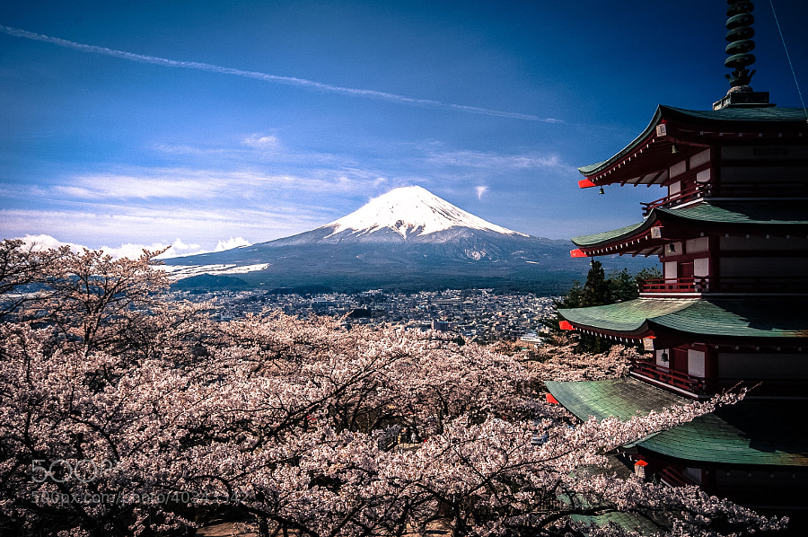Photograph Mount Fuji Sakura by Andreas Jensen on 500px