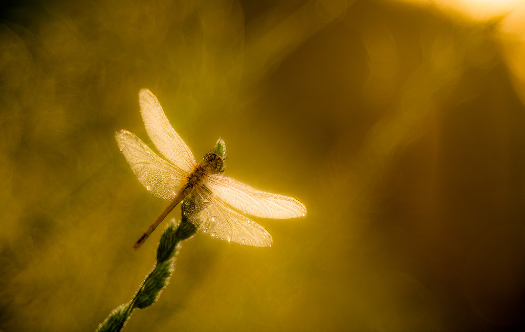 Photograph kissed by the sun by Alberto Di Donato on 500px