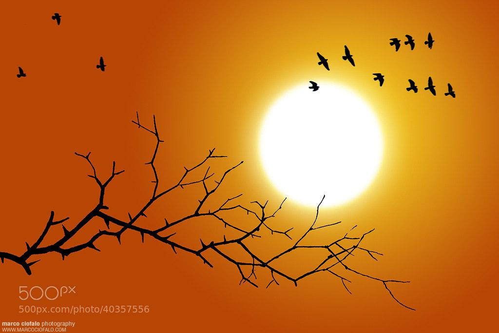 Photograph Sunbirds by Marco Ciofalo Digispace on 500px