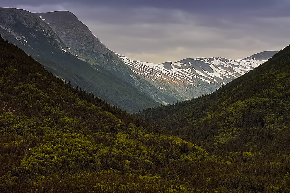 Photograph A patch of green in Alaska by Greg McLemore on 500px