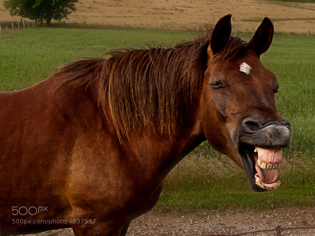 Photograph Mr. Ed by Kevin  Pepper on 500px