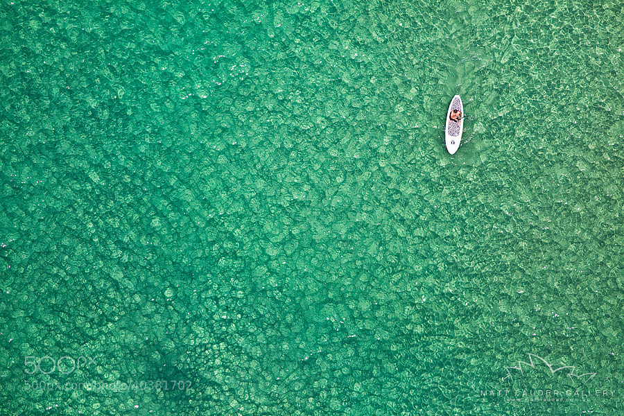 Photograph Bondi Paddleboarder by Matt Lauder on 500px