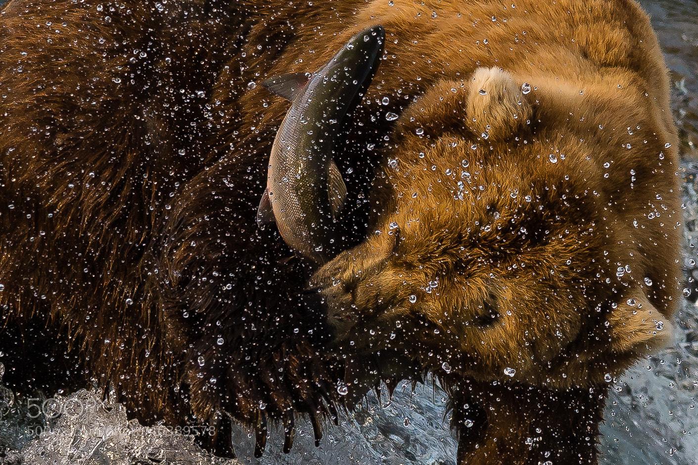 Photograph I got you! by Evgeny Tchebotarev on 500px