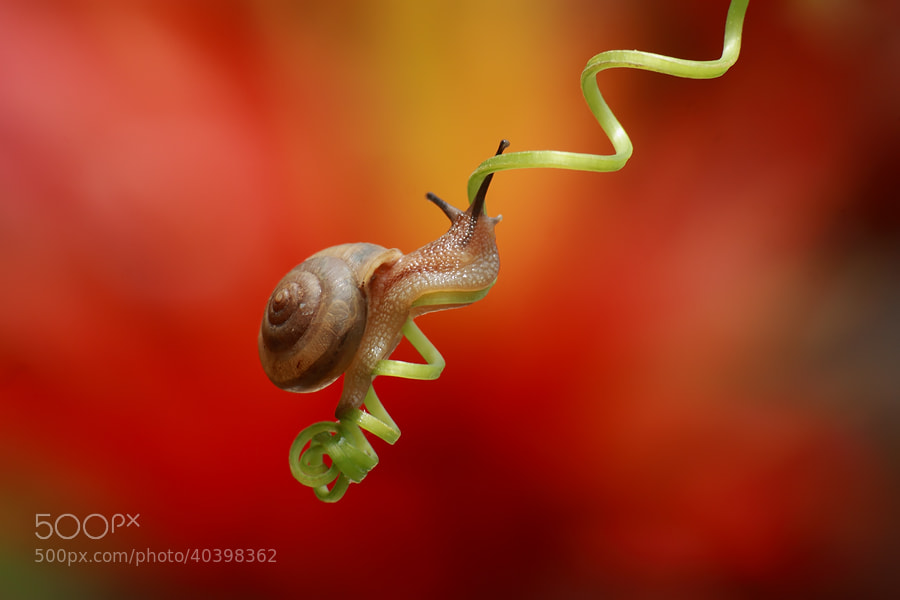 Photograph my spiral way by bayu sanjaya on 500px