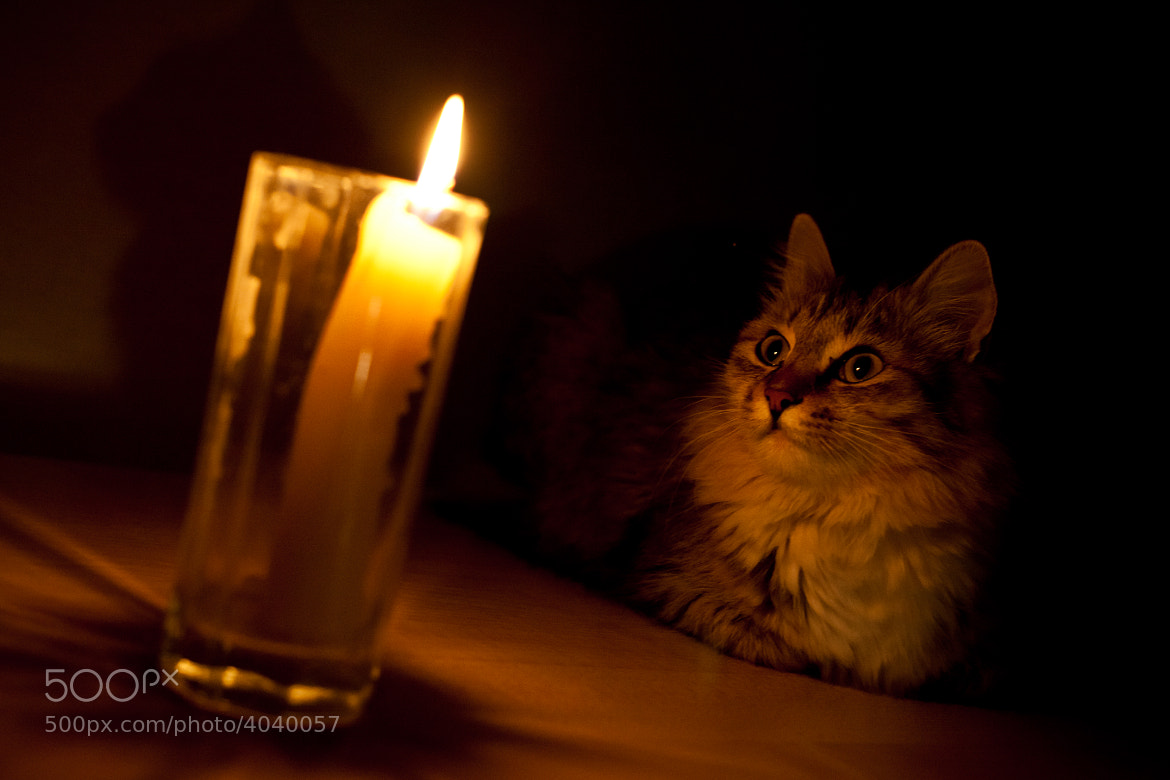 Photograph A cat looking to the light by Igor' Popov on 500px
