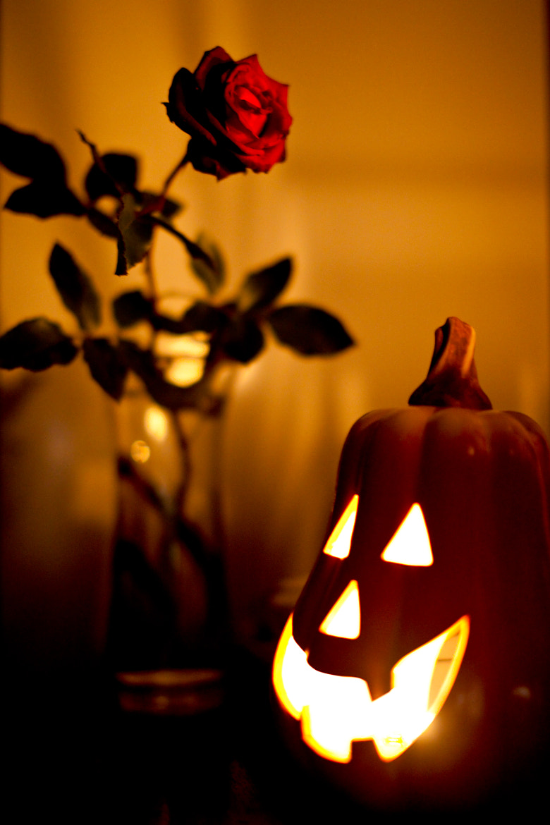 Photograph A pumpkin and a rose by Igor' Popov on 500px