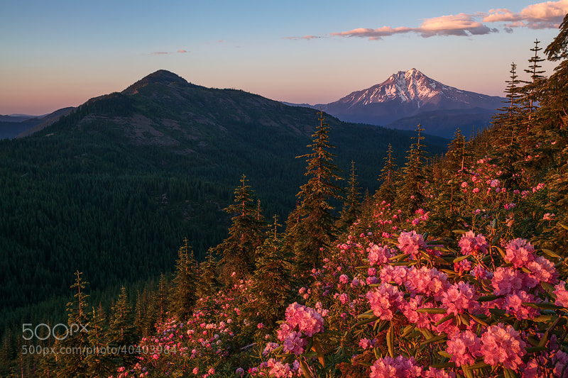 Photograph Mt Jefferson and Rhododendrons by Alan Howe on 500px