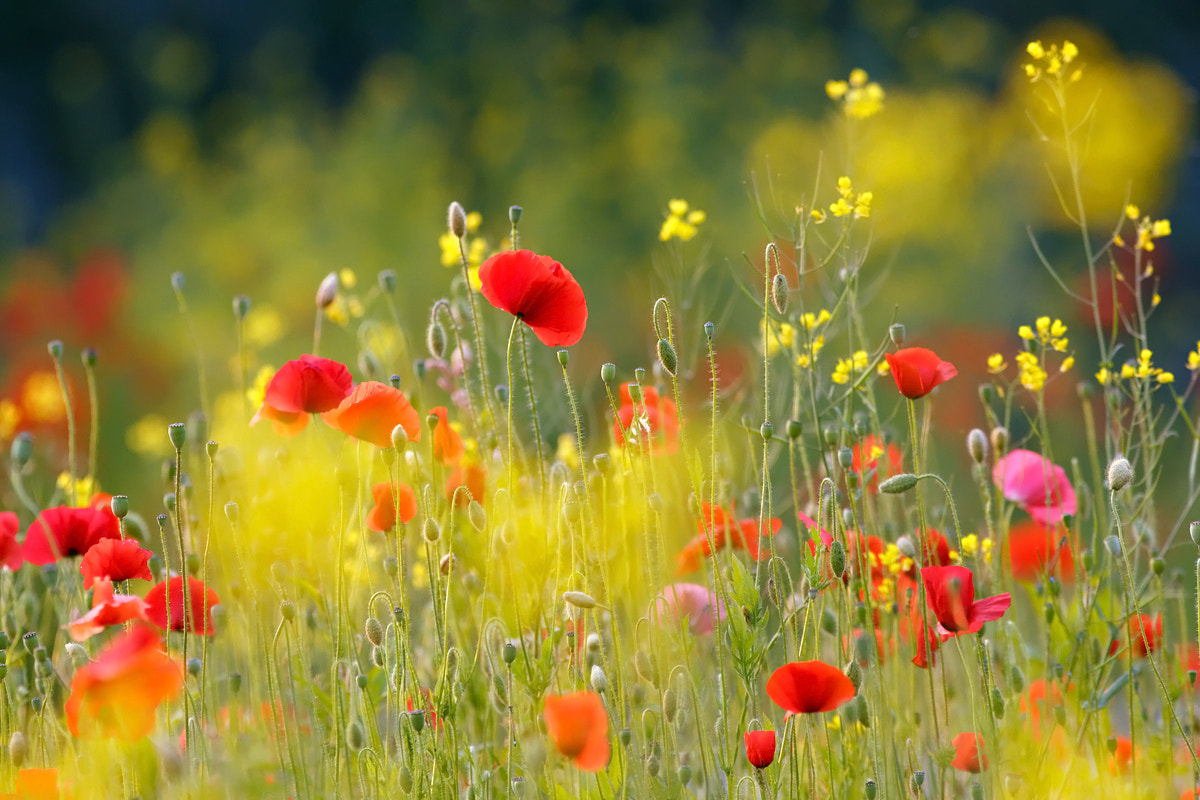 Photograph United Colours of Summer by Roeselien Raimond on 500px