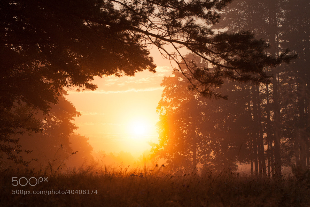 Photograph Morning by Denis Belyaev on 500px