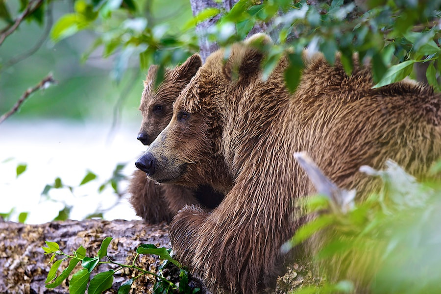 Photograph Before The Snooze by Buck Shreck on 500px