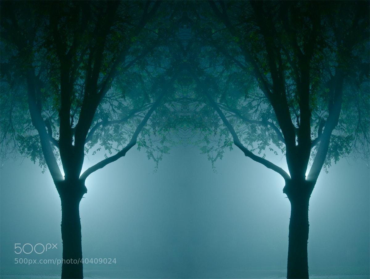 Photograph Symmetry by Joshua Tagicakibau on 500px