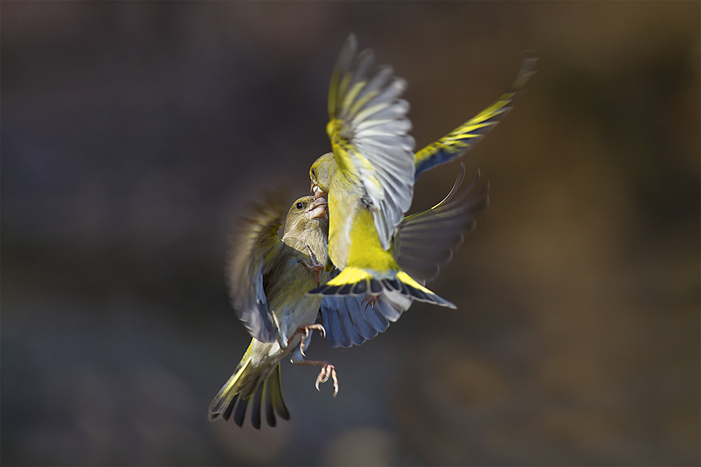Photograph Karate Kid! by Marco Redaelli on 500px